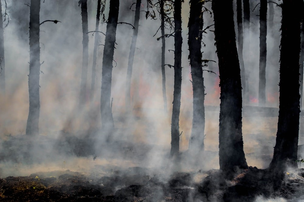 Silhouette of trees in a smoke covered forest